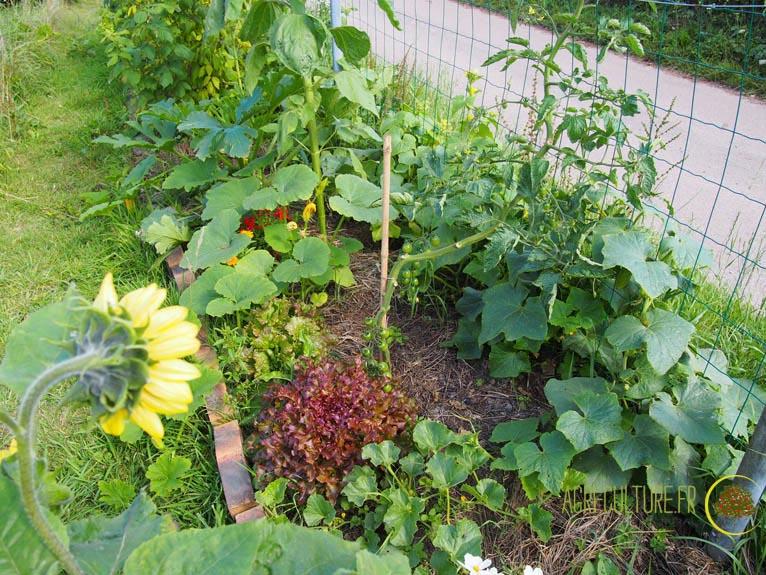 permaculture 2 le jardin campagnard d alys et richard agri culture. Black Bedroom Furniture Sets. Home Design Ideas