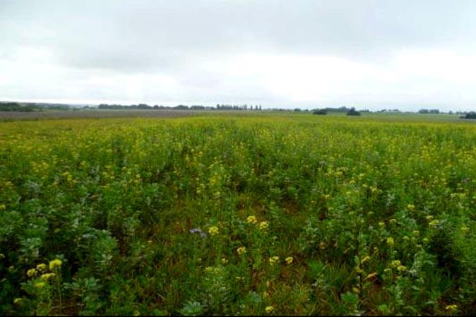 Agriculture de conservation un appel projets dans l - Chambre d agriculture de seine maritime ...