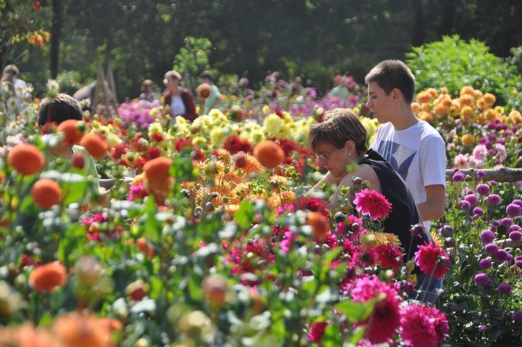 20e festival des dahlias et des jardins agri culture for Culture des jardins