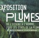 Plume(s), une exposition au Parc de Clères