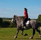 Fête du cheval Percheron 2017 Ste Gauburge St Cyr la Rosière Ecomusée Perche