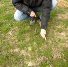 Réparer les prairies abimées grâce au sursemis