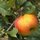 75ème Foire de la Pomme à Vimoutiers