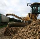 La filière sucrière confrontée à une crise sans précédent