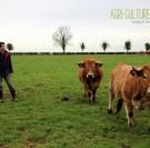 Esteville : éleveur bio aubrac vente directe viande bovine