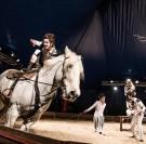 Spectacles : du cirque équestre au Pôle hippique de Saint-Lô
