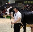 SIA 2019 - Sur le vif : le concours Prim'Holstein en images