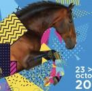 Equidays : 5 villes du Calvados fêtent le cheval