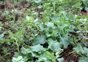 Visite d'essais : cultiver sur sol vivant dans le Bessin