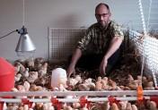 Les poulets de Gaëtan Bosc Edeline Gaëtan Royer