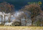 Arbres et haies : l'objet de toutes les passions en Normandie