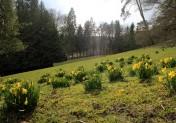 En Normandie ce week-end : c'est le printemps