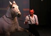 """""""Un Songe"""" : un nouveau spectacle équestre au haras du Pin"""