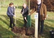 Le Caue 76 plante 40 arbres pour ces 40 ans