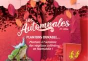 Les Automnales : apportez de la couleur dans votre jardin