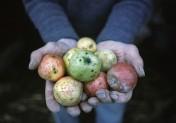 Des hommes, des pommes, et les paysans de Normandie au Château de Martainville
