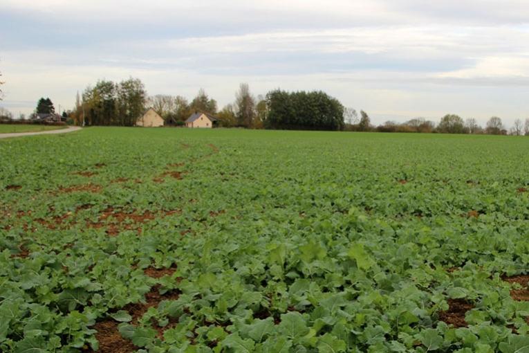 Ol agineux agri culture - Desherbage bio efficace ...