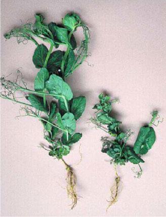 Le détergent du microorganisme végétal sur les pieds